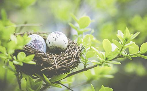 5 questions answered about NEST pensions